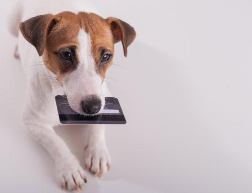 Élet a Covid után: kutyakozmetikusként így szerezhetsz új ügyfeleket